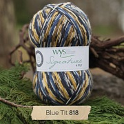 West Yorkshire Spinners Signature 4 Ply - Country Birds BLUE TIT